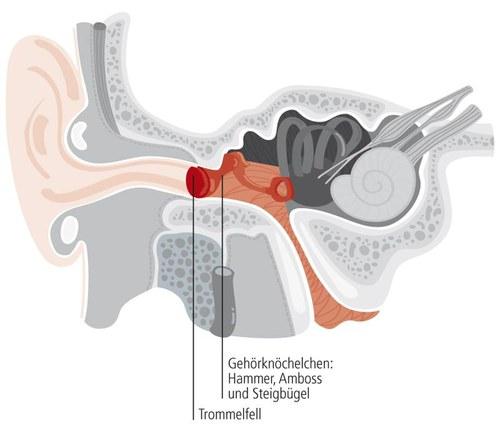 Lage des Mittelohrs im Querschnitt