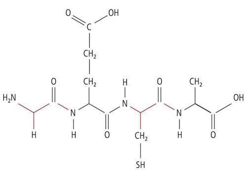 protein-1.jpeg