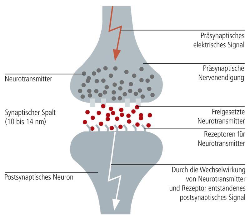 synapse-1.jpeg